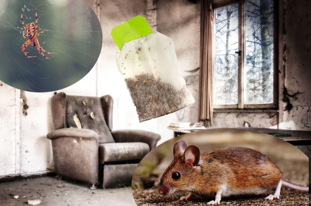 Get rid of mice and spiders in your house