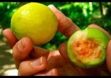 This Fruit Lowers The Pressure Faster Than Many Medications And Causes Hair To Grow In Piles