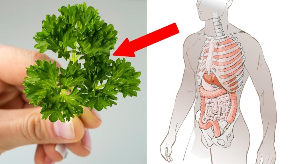 7 Reasons Why You Should Eat More Parsley Health Benefits of Parsley